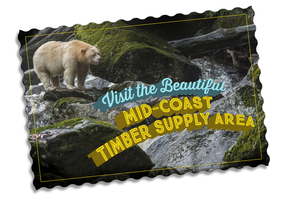 Great Bear rainforest Branding
